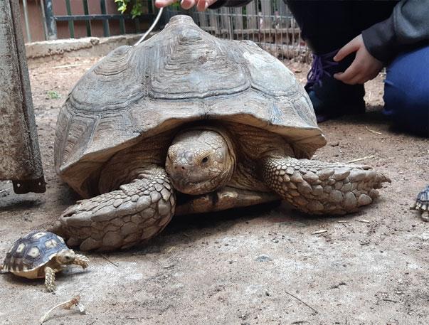 נווה צאלים - הנפשות הפועלות - על צבים וקשרים